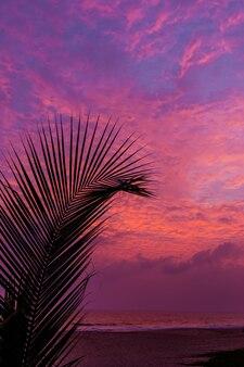 Ciel du soir avec des nuages de coucher de soleil spectaculaires et une lumière du soleil incroyable sur la silhouette des arbres