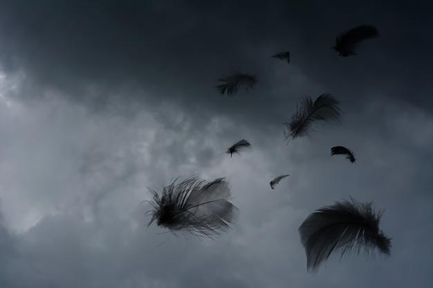 Le ciel est couvert et les plumes noires flottent