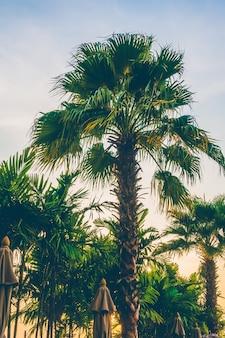 Ciel été tropical fond paysage