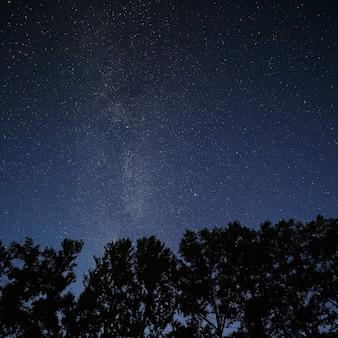 Ciel étoilé au-dessus des cimes des arbres de la forêt.