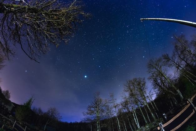 Le ciel étoilé de la forêt