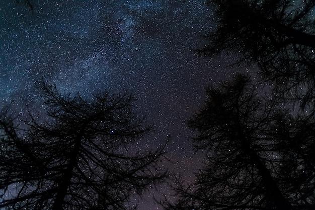 Le ciel étoilé vu de la forêt de conifères noirs