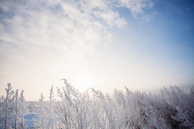 Ciel d'hiver bleu avec le champ d'herbe