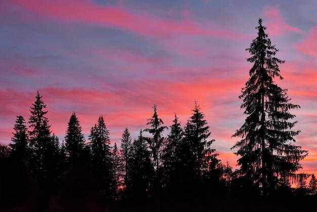 Ciel majestueux, nuage rose contre les silhouettes de pins au crépuscule.