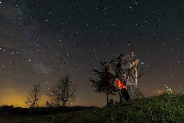 Ciel nocturne sur un vieil arbre solitaire illuminé