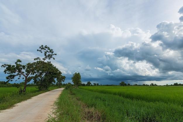 Ciel de nuages au-dessus du champ de riz avec la réflexion de l'eau