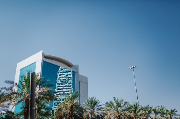 Ciel et palmiers. arabie saoudite paysage de riyad - riyad