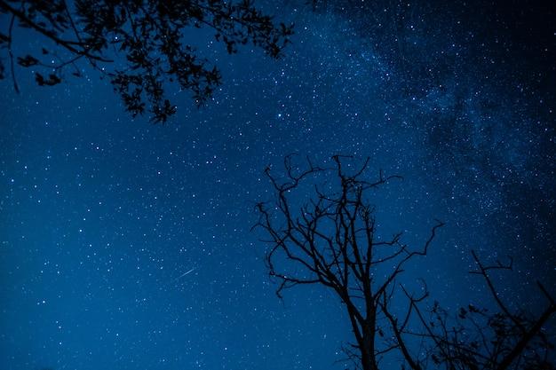 Ciel plein d'étoiles
