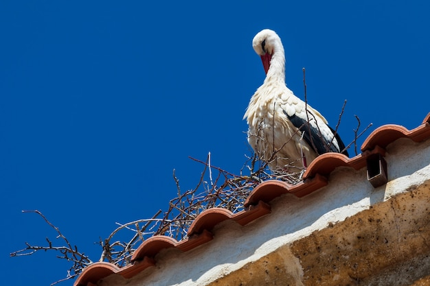 Cigogne se toilettant sur le toit d'une église. journée ensoleillée et ciel bleu.