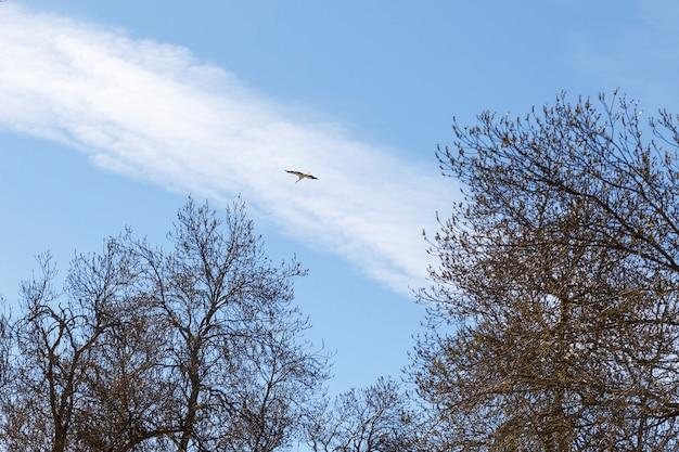 Cigogne survolant les arbres