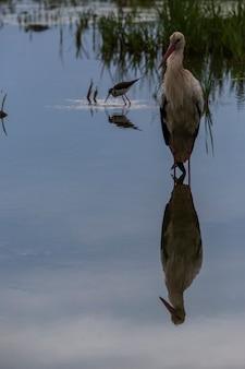 Cigognes au printemps dans la réserve naturelle des aiguamolls de l'emporda, espagne.