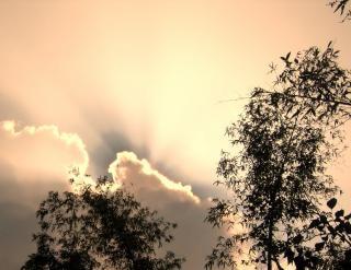 Cime des arbres et des nuages