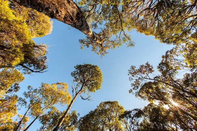Cime des arbres vue avec objectif fisheye