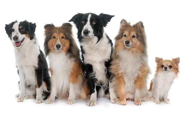 Cinq beaux chiens
