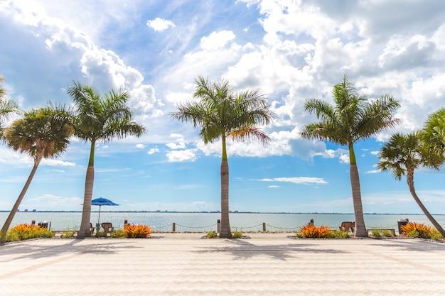 Cinq beaux palmiers sous le soleil de la floride, aux états-unis
