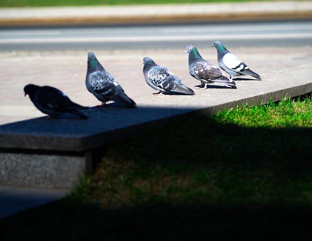 Cinq colombes sur fond de parapet de rue
