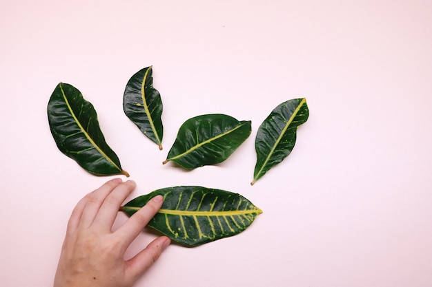 Cinq feuilles vertes