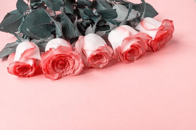 Cinq roses roses sur rose. copie espace - saint valentin, 8 mars, mère, concept de la journée de la femme