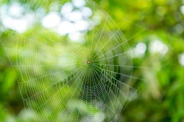 Une circulaire classique en forme de toile d'araignée dans la forêt tropicale.