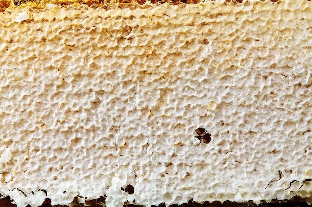 Cire d'abeille en nid d'abeille nouvellement tirée sur une base en plastique avec des traces de pollen.
