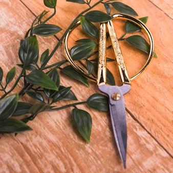 Ciseaux dorés à feuilles vertes