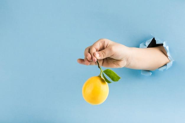 Un citron mûr avec une branche et des feuilles dans la main du trou dans le mur de papier sur un fond bleu.