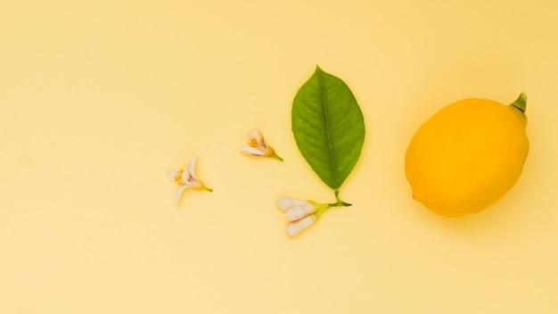 Citron vue de dessus avec des feuilles et des fleurs