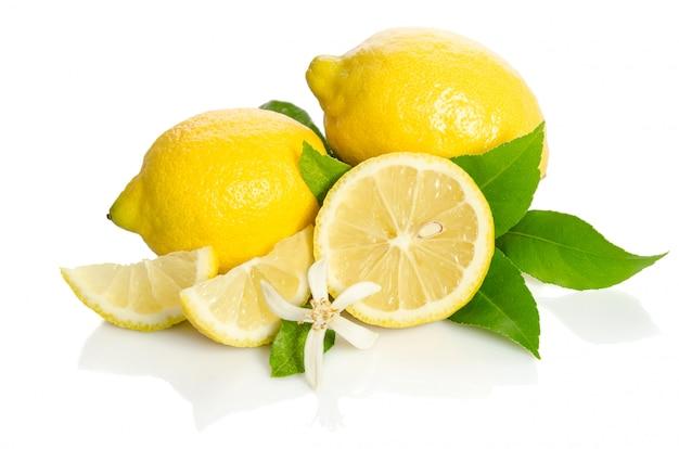 Citrons arbre fleur et un citrons isolé sur blanc