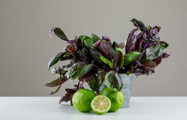 Citrons avec feuilles de basilic vue latérale sur gris et blanc