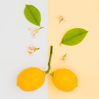 Citrons et feuilles vue du dessus