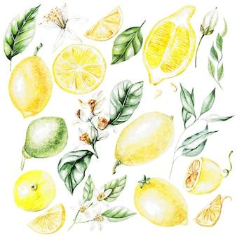 Citrons, fleurs et feuilles. fruits de style aquarelle. illustration