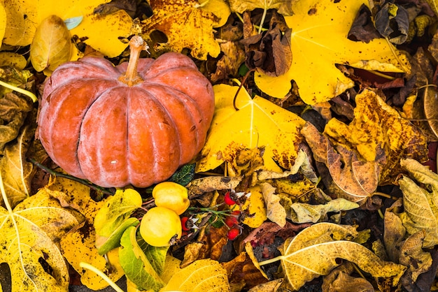 Citrouille aux feuilles d'automne