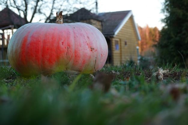 Citrouille sur l'herbe sur le fond du paysage d'automne