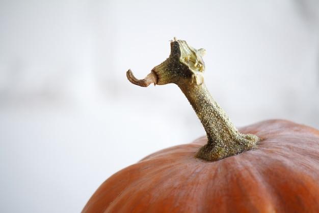 Citrouilles d'automne extrêmement rapprochés sur la table de thanksgiving,