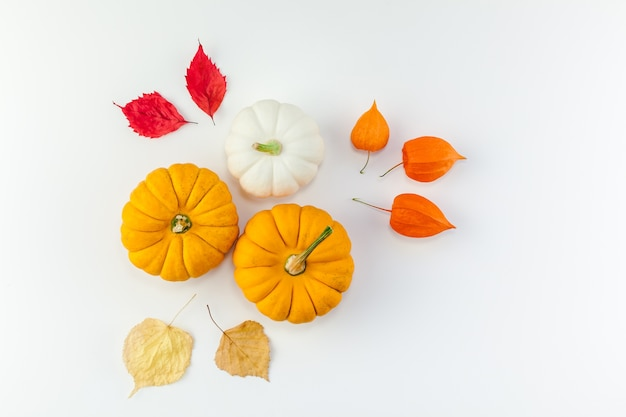 Citrouilles blanches orange fleurs et feuilles séchées