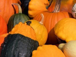 Citrouilles coloré à l'automne, calebasse