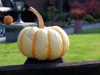 Citrouilles coloré à l'automne, de légumes