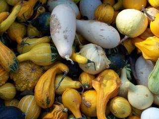 Citrouilles coloré à l'automne
