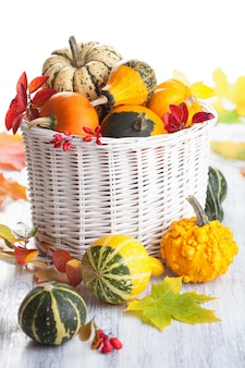 Citrouilles décoratives et feuilles d'automne isolées