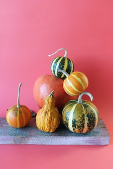 Citrouilles sur fond orange thanksgiving récolte automne halloween
