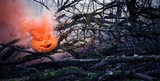 Citrouilles d'halloween dans la forêt d'automne effrayante