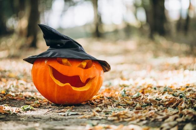 Citrouilles d'halloween dans une forêt d'automne