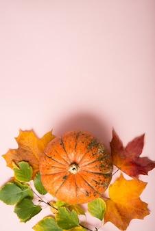 Citrouilles mûres d'automne sur fond rose, nature morte le jour de thanksgiving, vue de dessus, espace pour copie