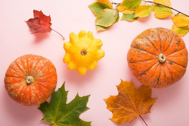 Citrouilles mûres d'automne sur fond rose, nature morte le jour de thanksgiving, vue de dessus, mise à plat