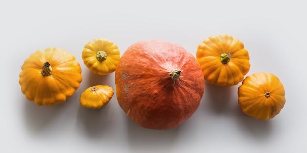 Citrouilles orange fraîches, à plat