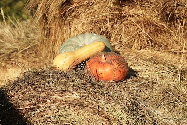 Les citrouilles reposent sur une botte de foin, éclairée par le soleil