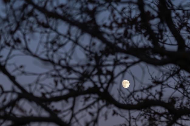 Clair de lune à travers les branches d'un arbre