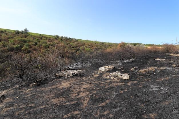 Clairière avec arbres brûlés et herbe prairie brûlée noire