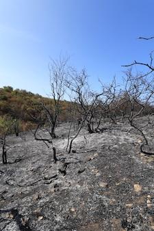 Clairière avec des arbres brûlés et de l'herbe prairie brûlée noire