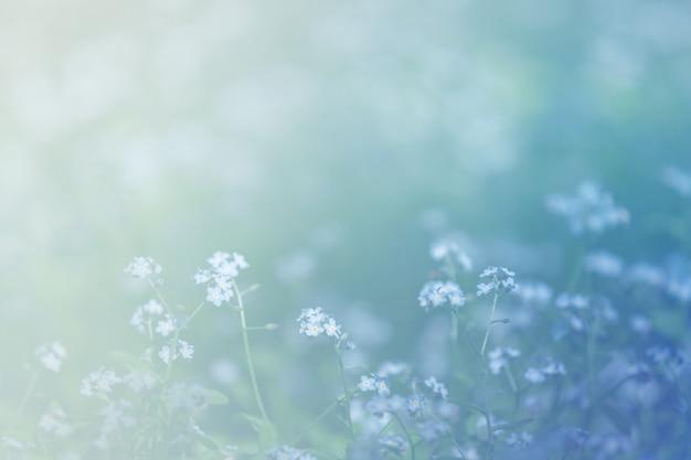 Clairière d'été avec fond de défocalisation bleu forgetmenots